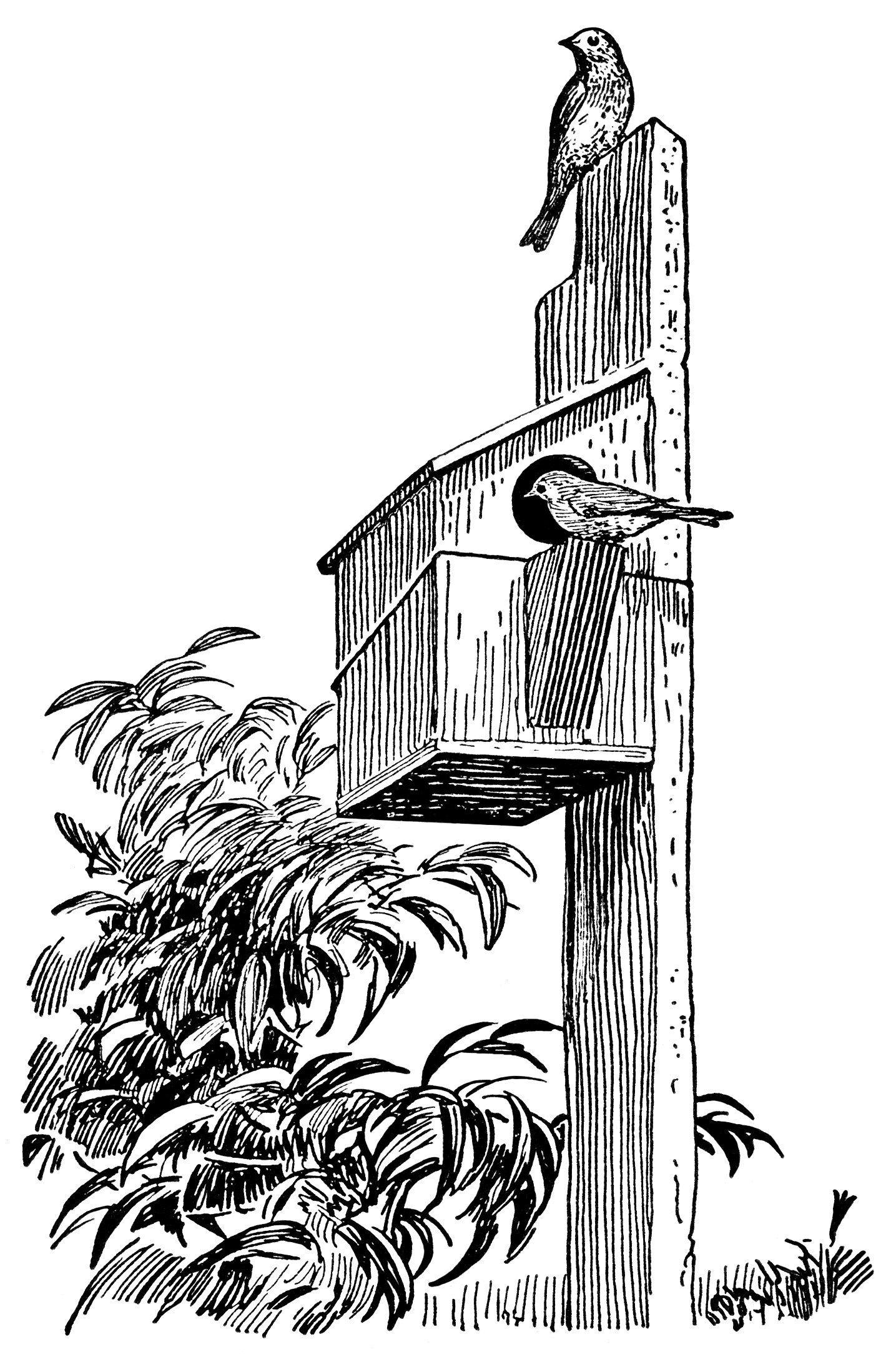 Vintage Bird Clip Art Black And White Clipart Birdhouse