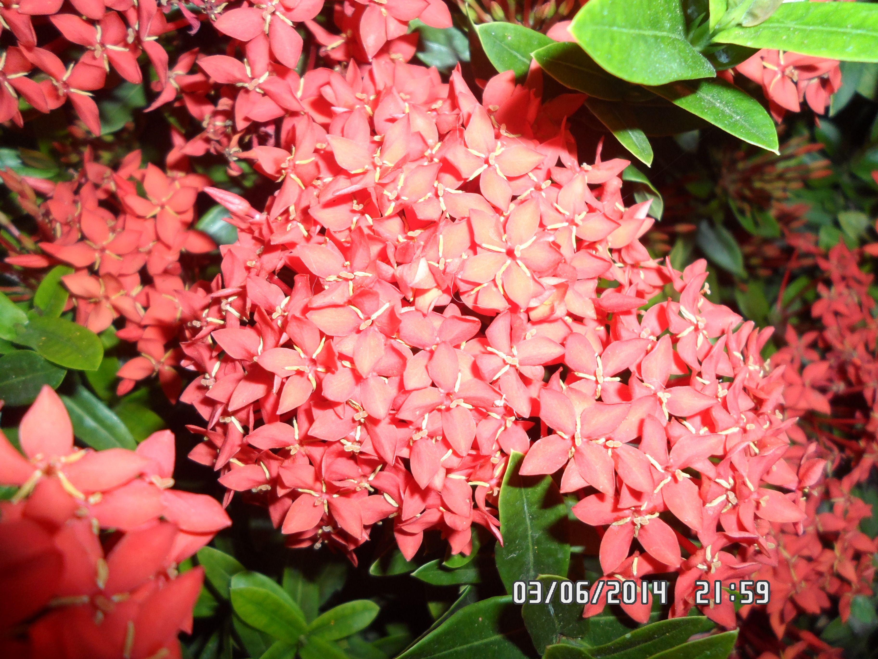 flores de mi jardin