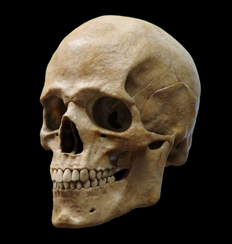 Skull by Guzz Soares   Medical Visualization   3D   CGSociety ...