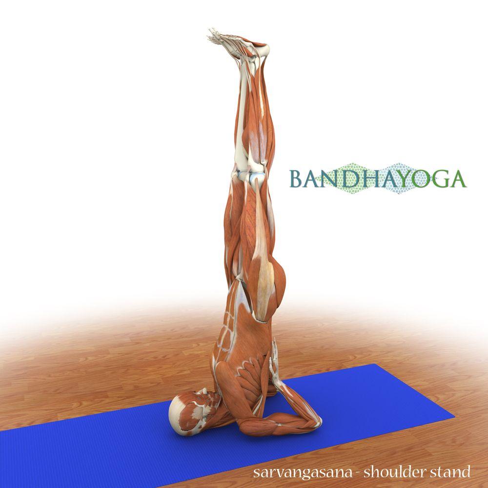 Awesome free Yoga Anatomy resources - Ebooks, 360\' Anatomic Pose ...