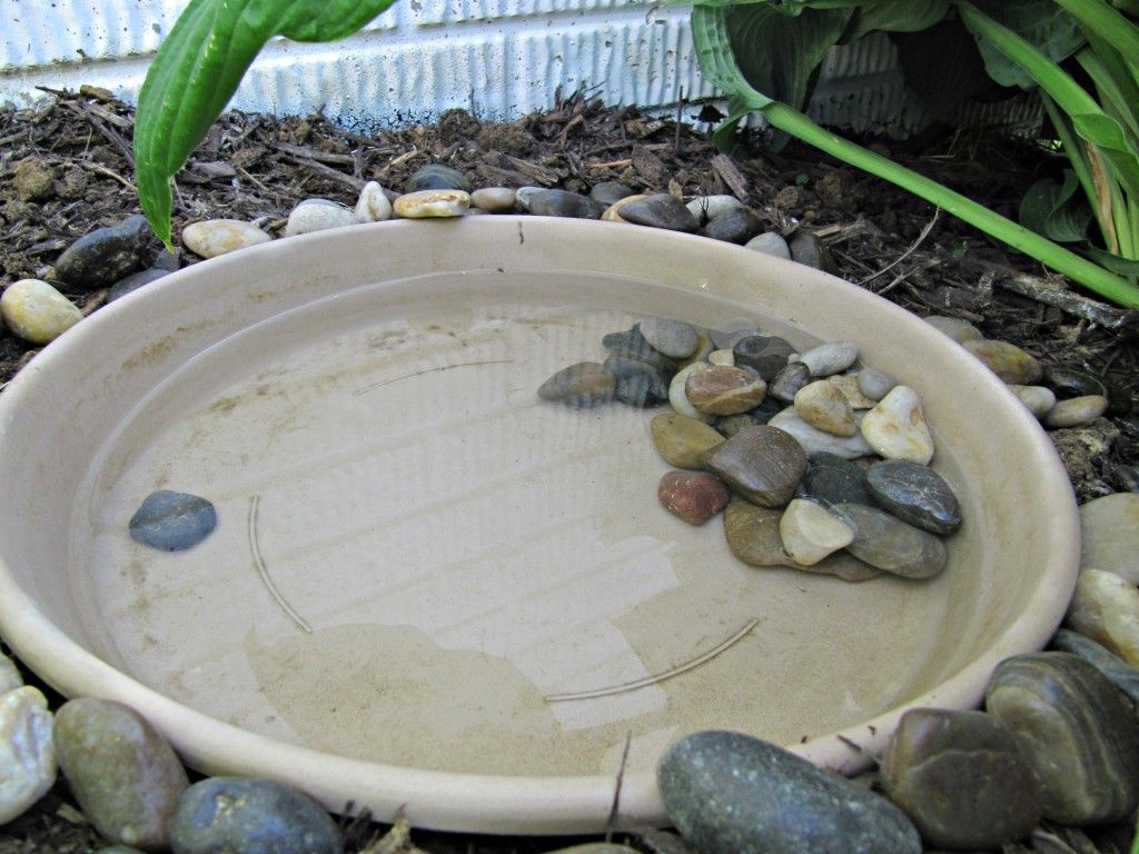 How To Build A Toad House Habitat