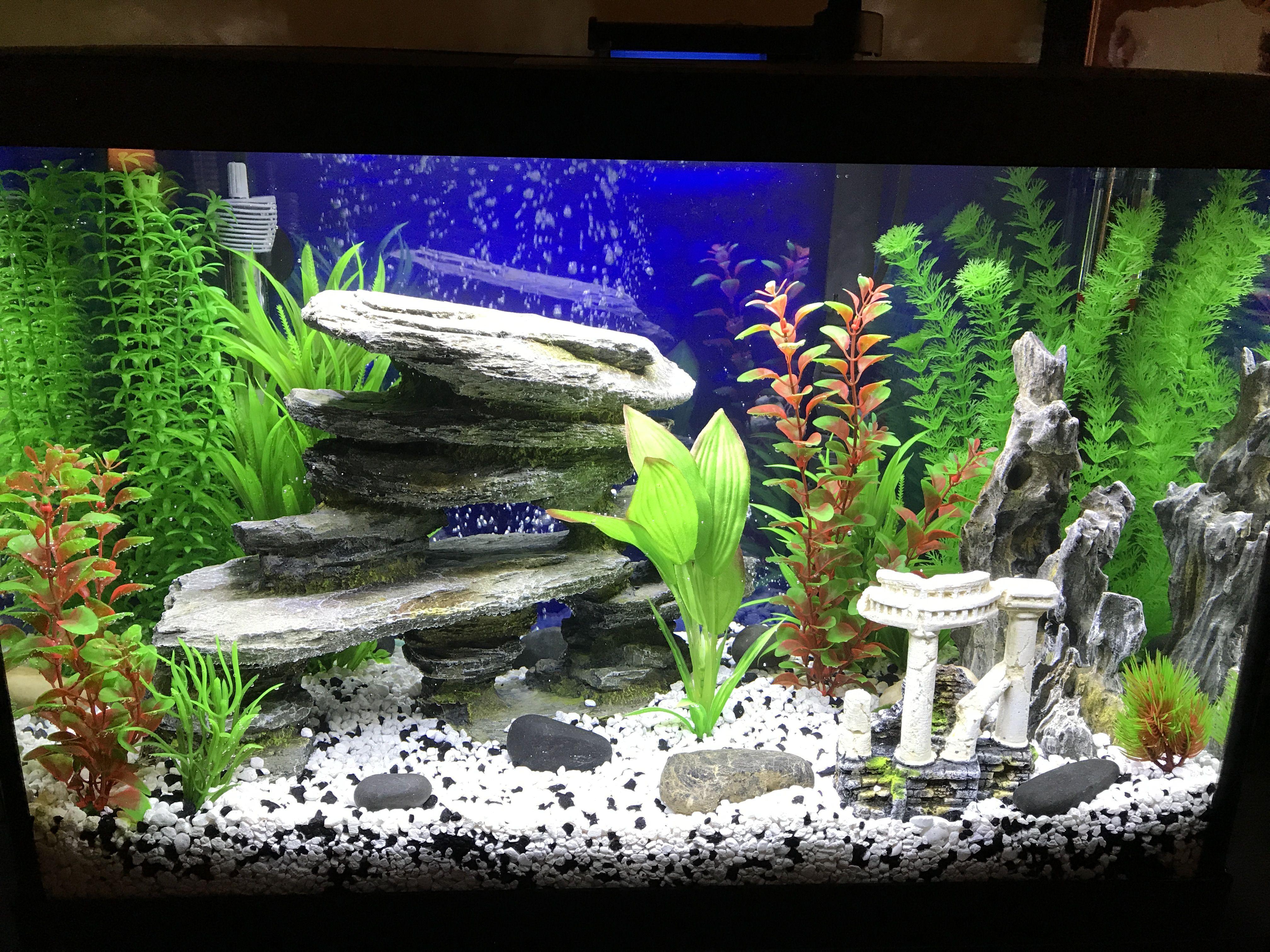 4b1e47ebc13279c5eab86e35a170e11c Frais De Aquarium Amazonien Concept