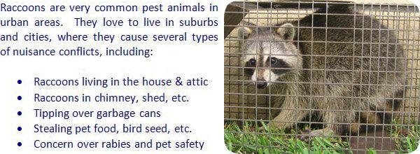 Raccoon Repellent Moth Balls Ammonia Sound Machine Deterrent