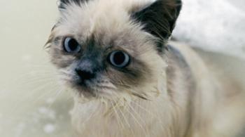 7 Coisas que os gatos odeiam                              …