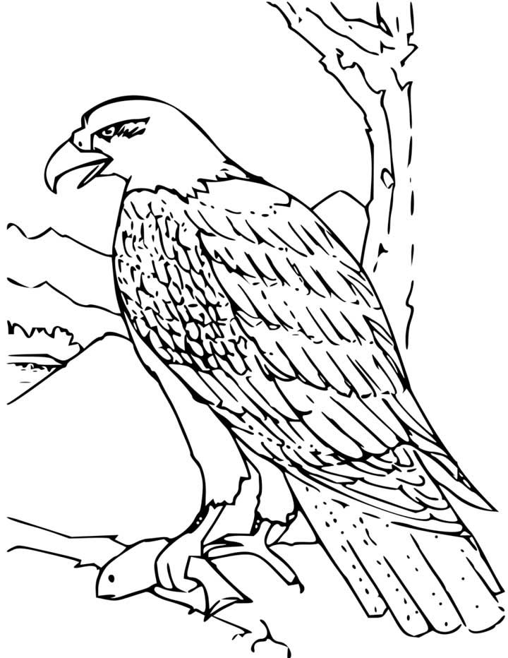 This Coloring Page For Kids Features A Bald Eagle Just Moments After It Caught A Fish Coloring Pictures Coloring Pages Bird Coloring Pages