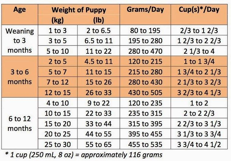 how much to feed a lab puppy in grams