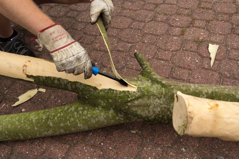 Kratzbaum mit echtem Stamm selber bauen: Hier geht's zur Anleitung