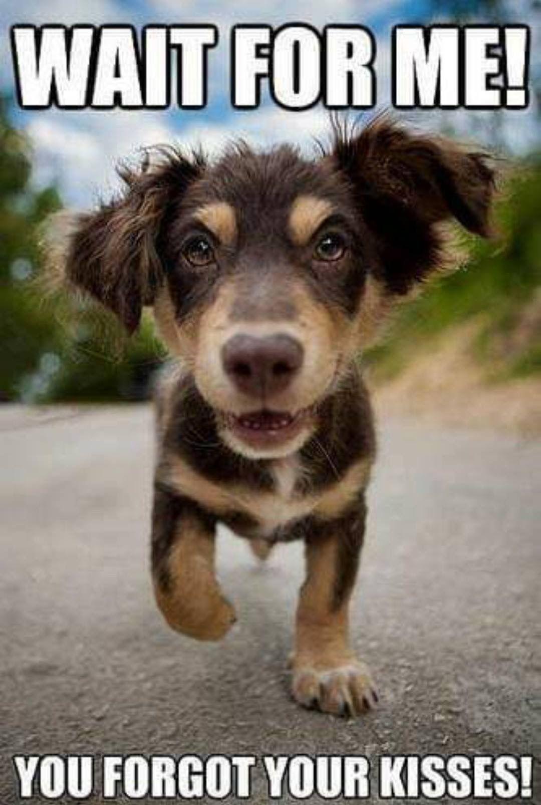 Pin By Nancy Owens Merenda On Dog Love Cute Animals