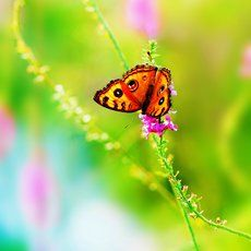 Butterfly, flower, summer, nature, insect, color, bright