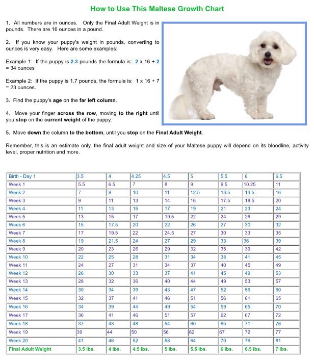 Maltese Growth Chart Petmaltese