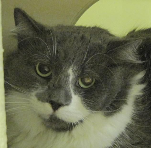 Adopt Pixie On Petfinder Humane Society Adoption Pixie
