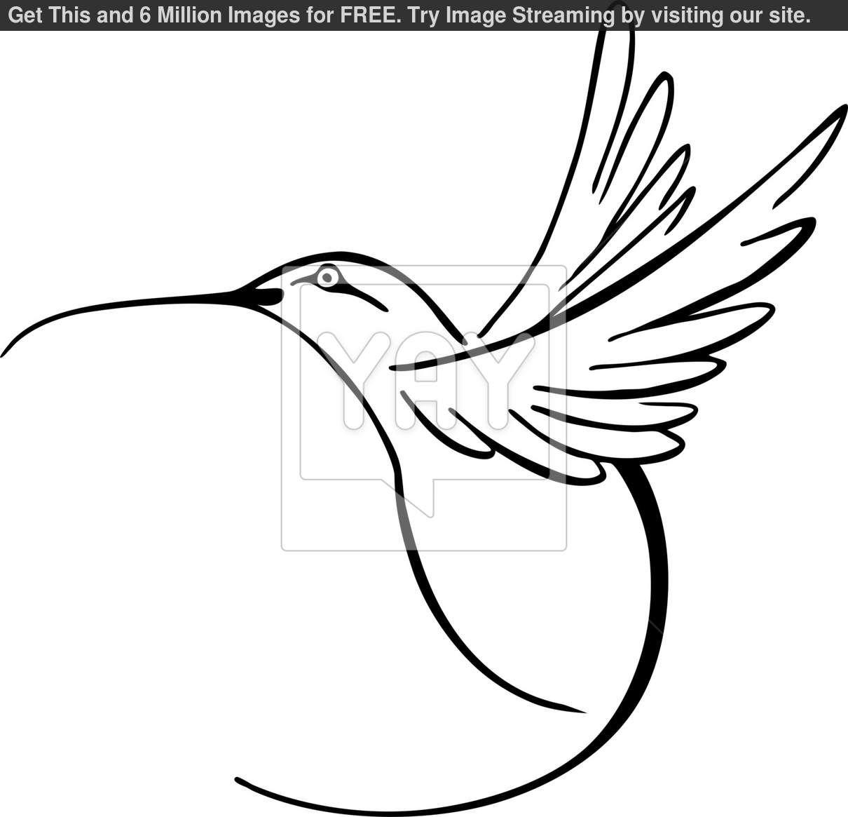 clip art black and white hummingbird