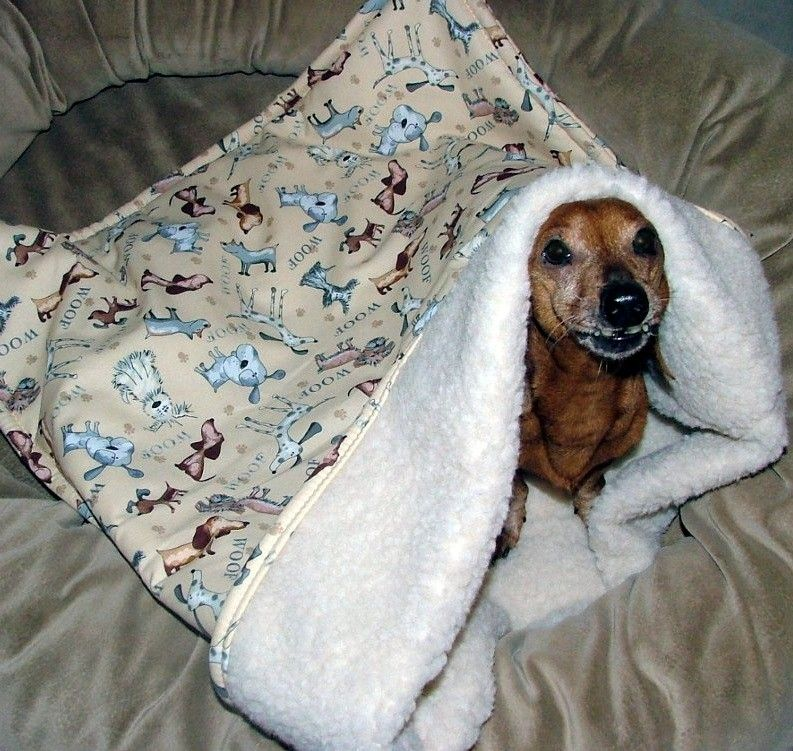 Do Chihuahuas Like To Sleep In Doggie Beds
