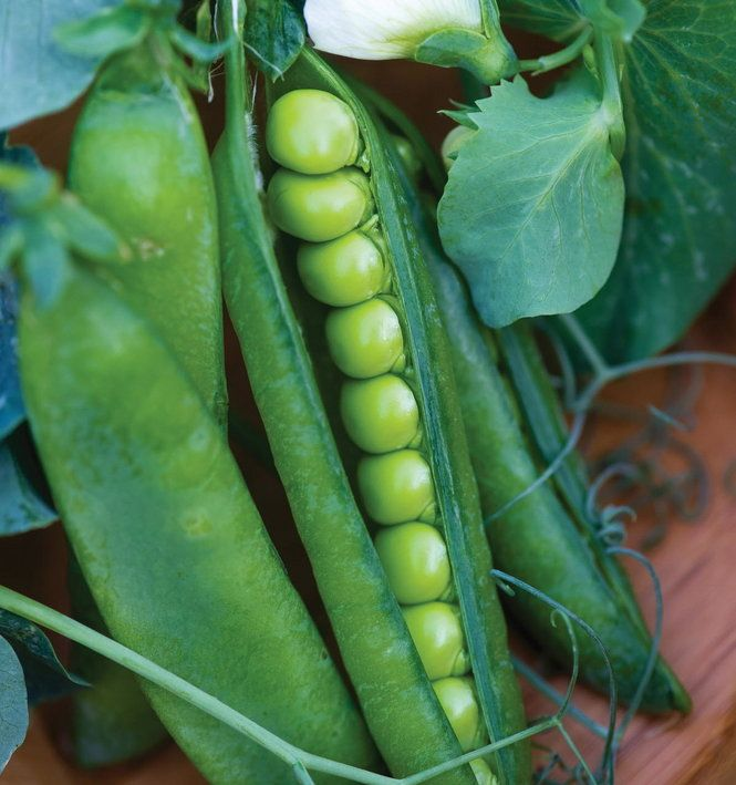 10 Top Vegetables To Grow In Containers Spring To Fall: Plant Peas Now! 10 Tips To Guarantee Gardening Success