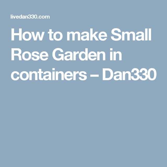How to make Small Rose Garden in containers – Dan330