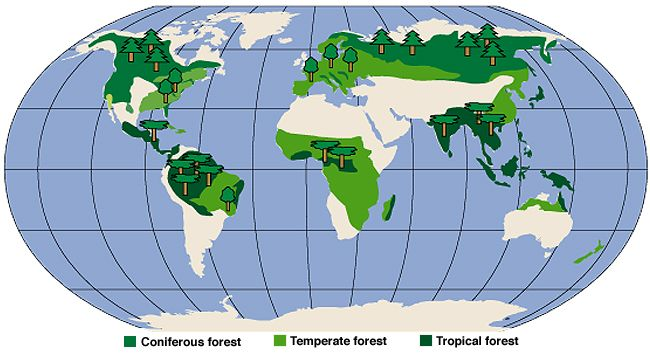 Image result for world map of forest distribution hikingtravel image result for world map of forest distribution gumiabroncs Gallery