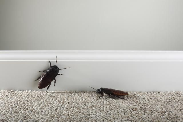 Pin On Get Rid Of Insects That Eat Clothes Us