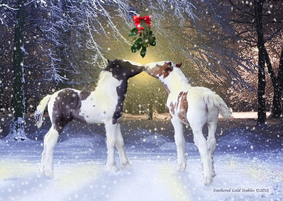 Image result for gypsy vanner foal xmas