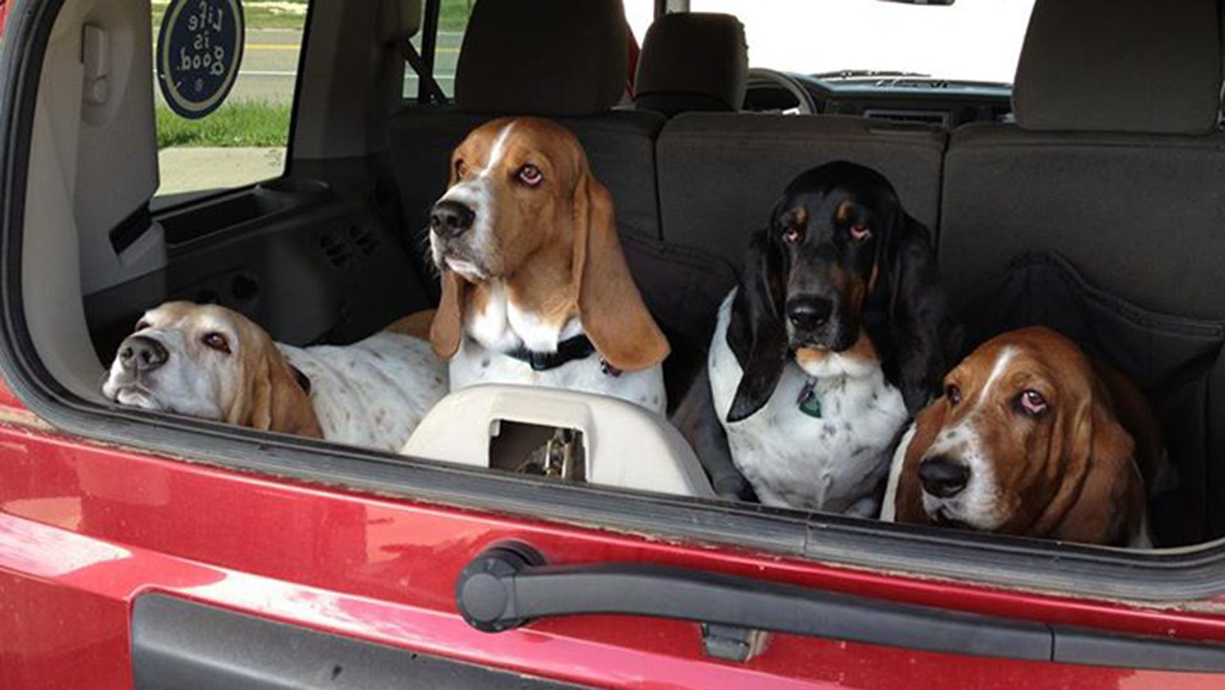 6 Things I Wish I Knew Before Getting A Dog Basset Puppies Dogs