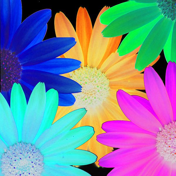 Bright Colours 2 by Louise Grant