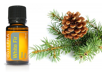Natural Christmas Tree Smell (without a real tree) year | Christmas tree essential oil ...