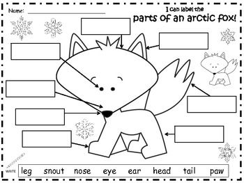 a arctic fox label the parts of the arctic fox preschool arctic fox arctic animals. Black Bedroom Furniture Sets. Home Design Ideas