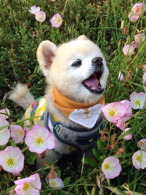 Aaaachoooo 可愛い 動物 可愛い 生き物 ワンコ