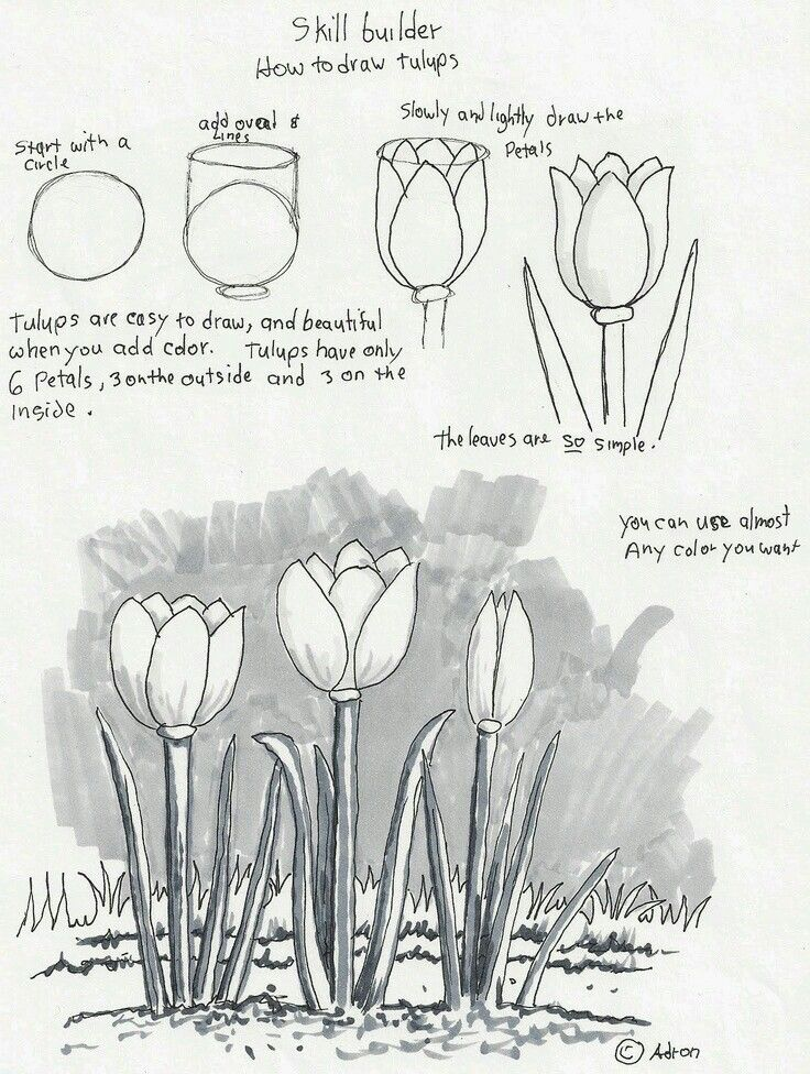 Flower adrons art lesson plans how to draw tulips a beginners drawing lesson