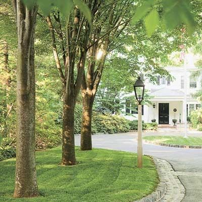 Fast Growing Shade Trees Fast Growing Shade Trees And