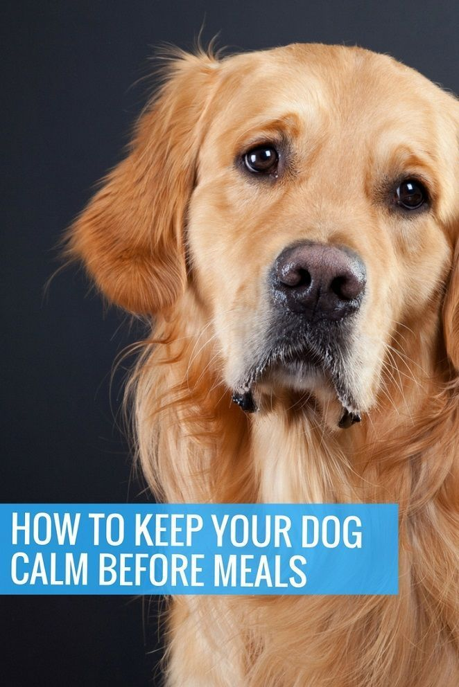 How To Keep Your Dog Calm Before Meals 3 Commands That Will Help