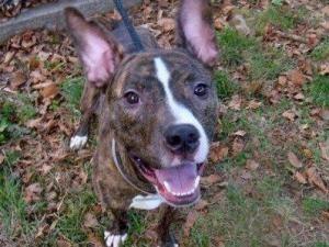 Adopt Magnus On Animals Animal Shelter Pets