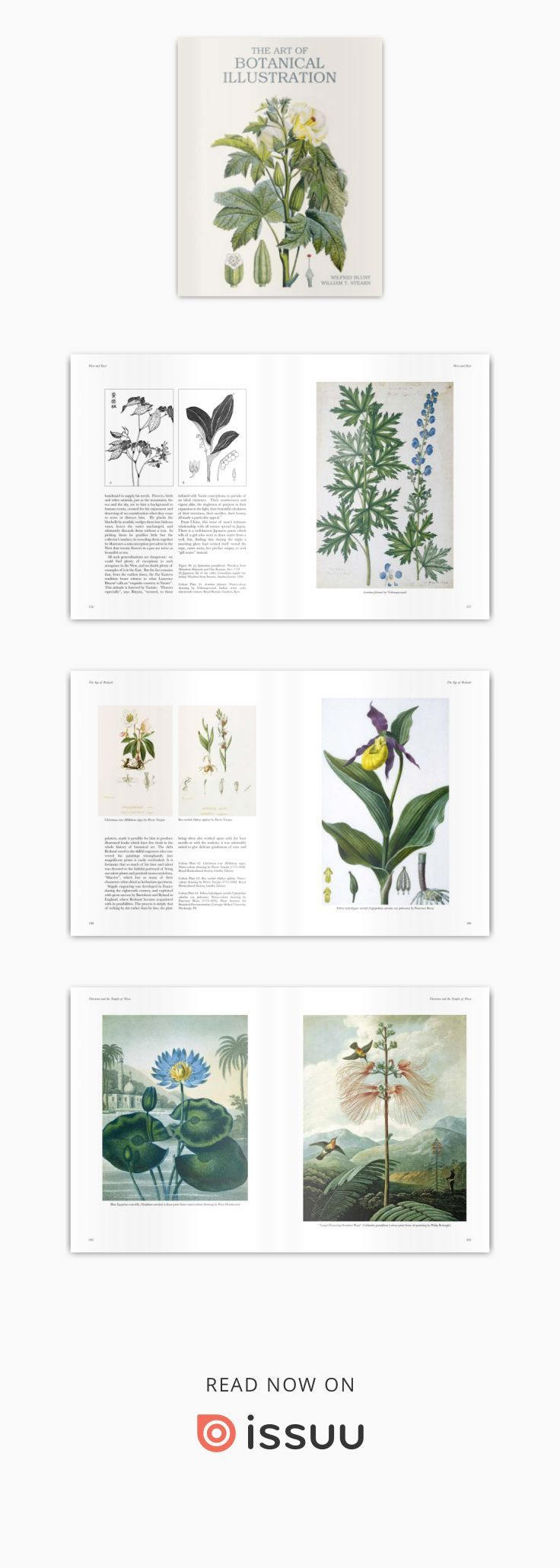 Art Of Botanical Illustration Botanical Illustration Botanical Illustration