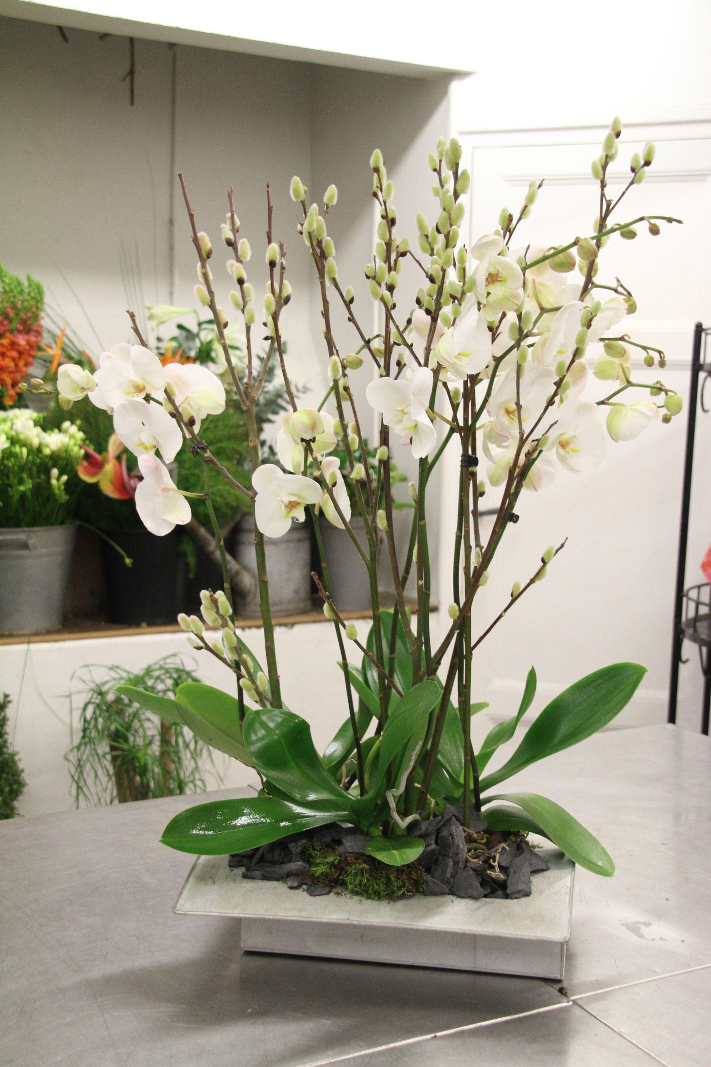 Atelier Floral Aquarelle Com Composition D Orchidees Blanches
