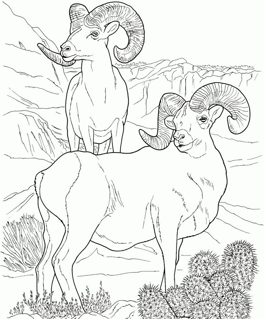 Desert Coloring Pages Best Coloring Pages For Kids Animal Coloring Pages Desert Animals Coloring Turtle Coloring Pages [ 1024 x 848 Pixel ]