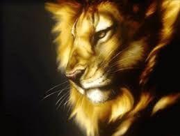 dibujos de leones profesionale - Buscar con Google