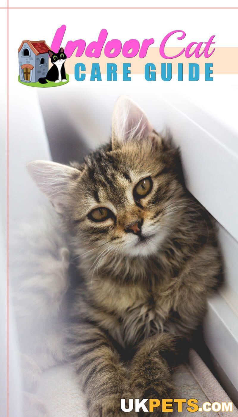 Indoor Cat Care Guide Cat care, Cat having kittens