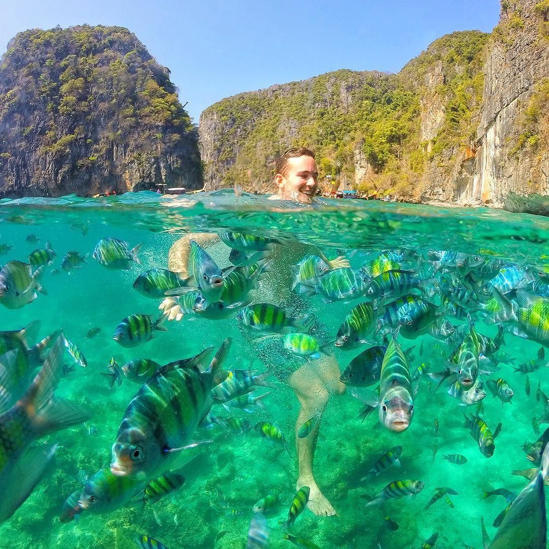 Thai Island Koh Phi Phi: Swimming With Thousands Fishes Koh Phi Phi Leh