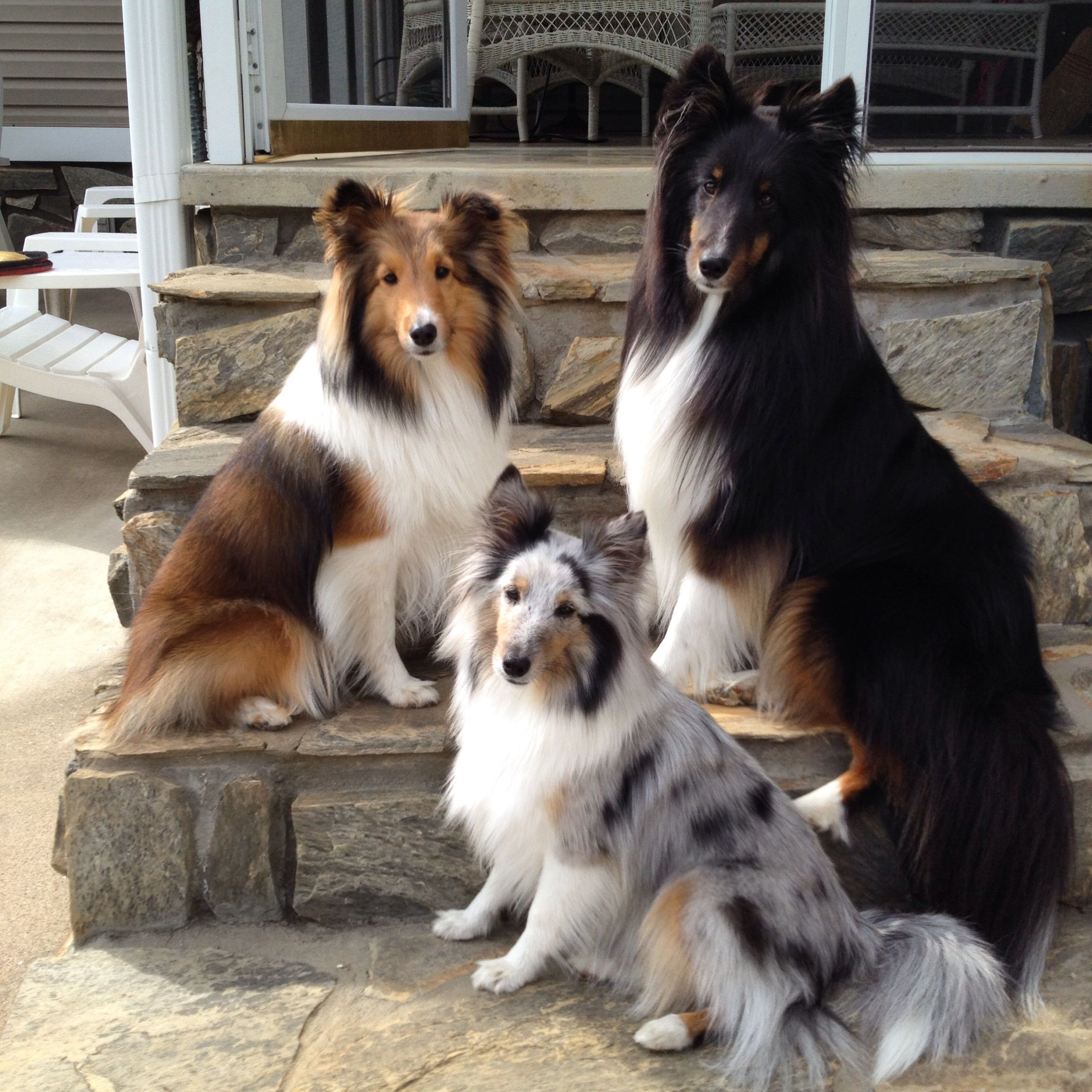 My Fur Kids Awww They Are Beautiful My Annabelle Would Fit