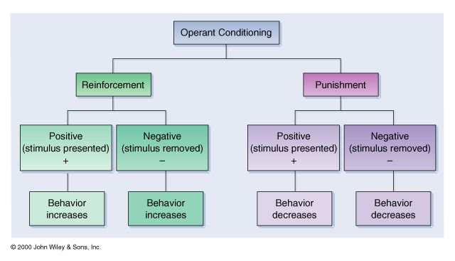skinners operant conditioning theory essay
