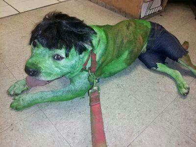 The Incredible Hulk Girl And Dog Pet Costumes Halloween Animals