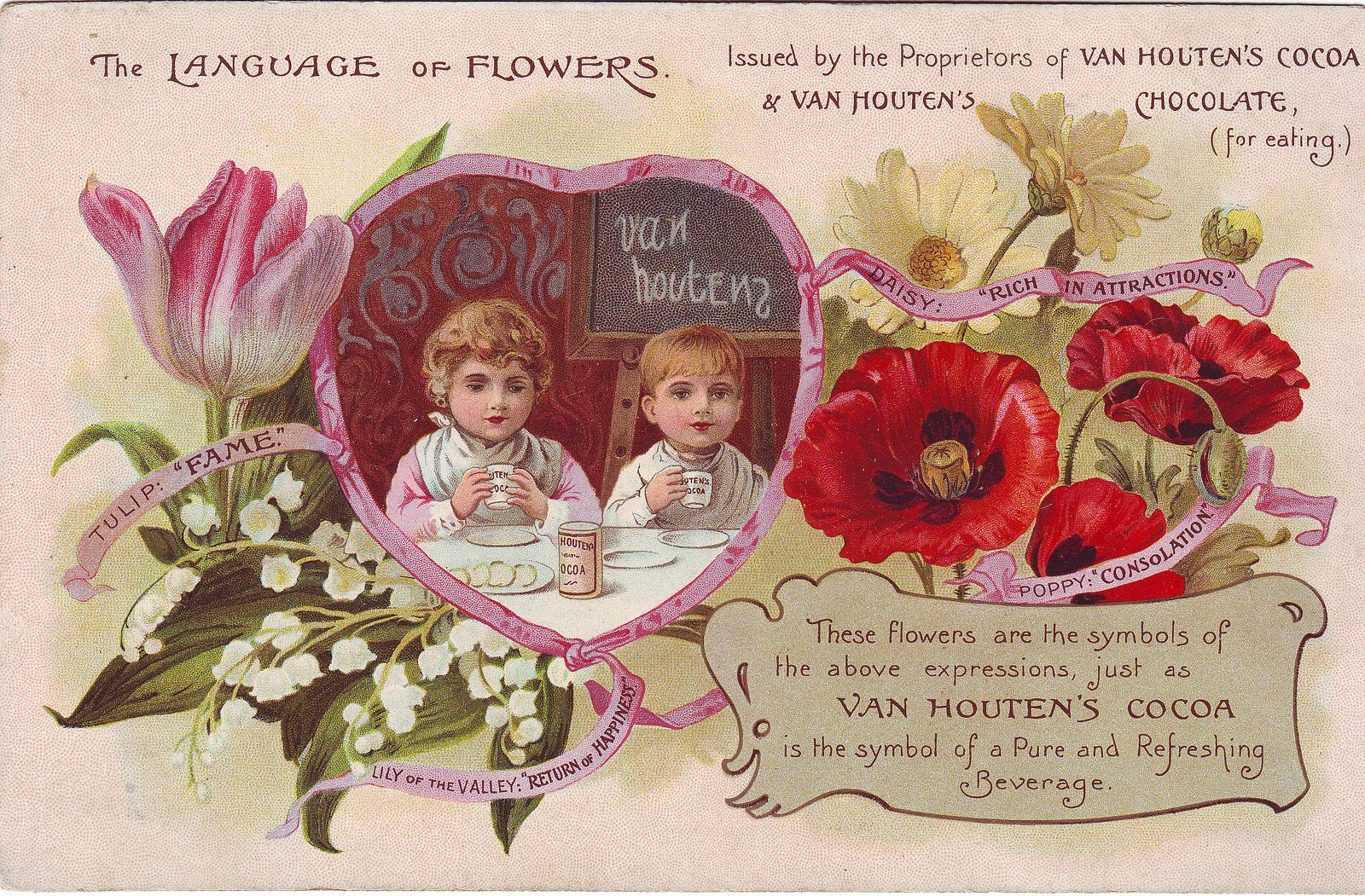 Cacao van houten the language of flowers tulip lily