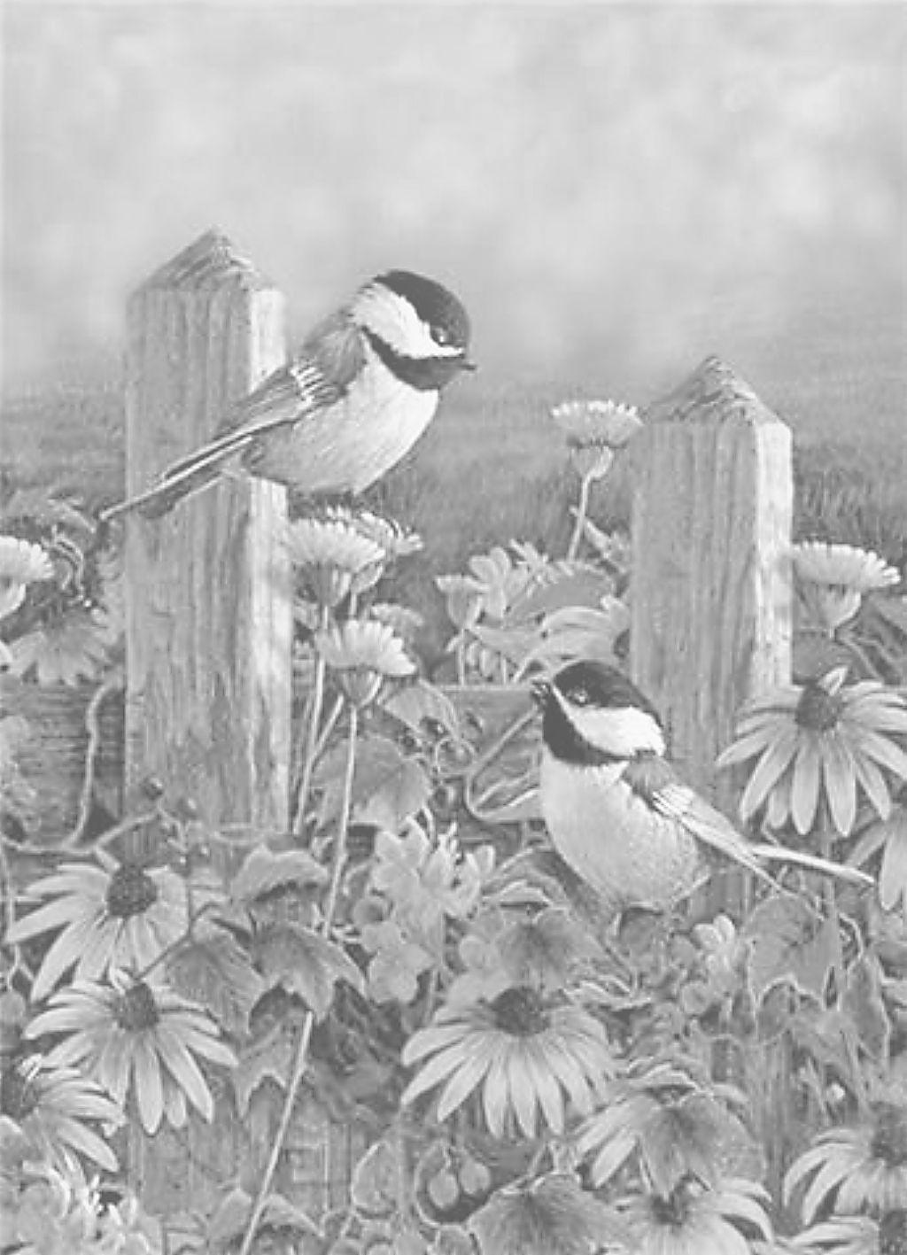 Sam Timm Chickadees | Colorear, Dibujo y Mandalas