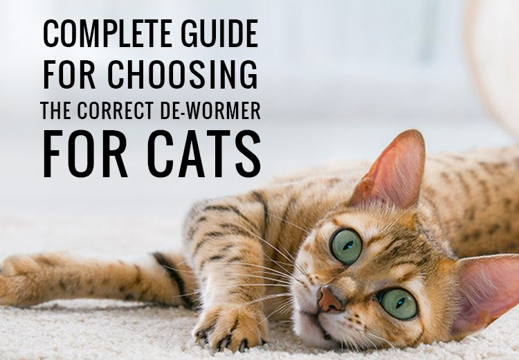 Complete Guide For Choosing The Correct Dewormer For Cats Cats Cat Dewormer Dogs