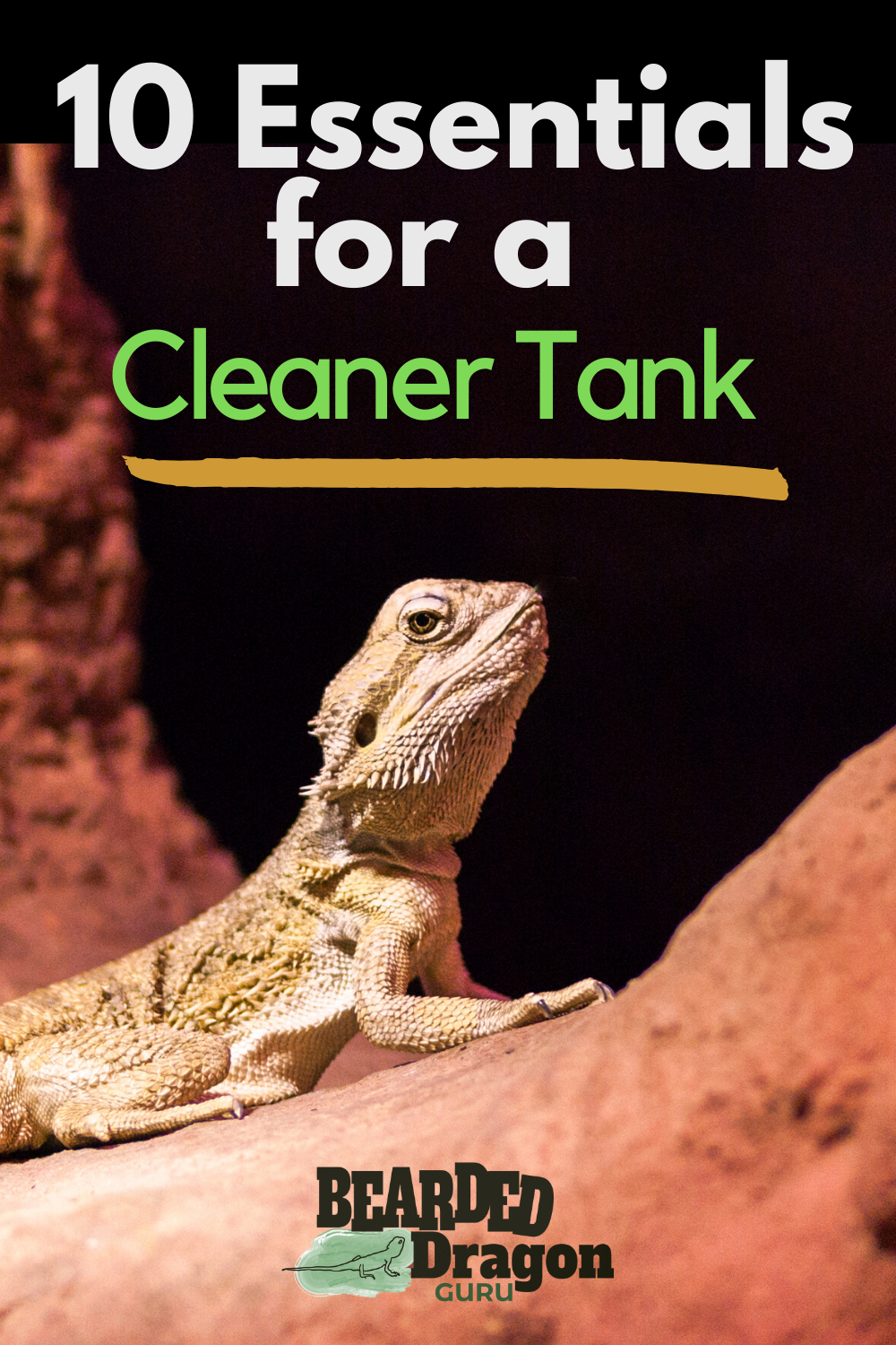 10 Essentials for a Cleaner Bearded Dragon Tank