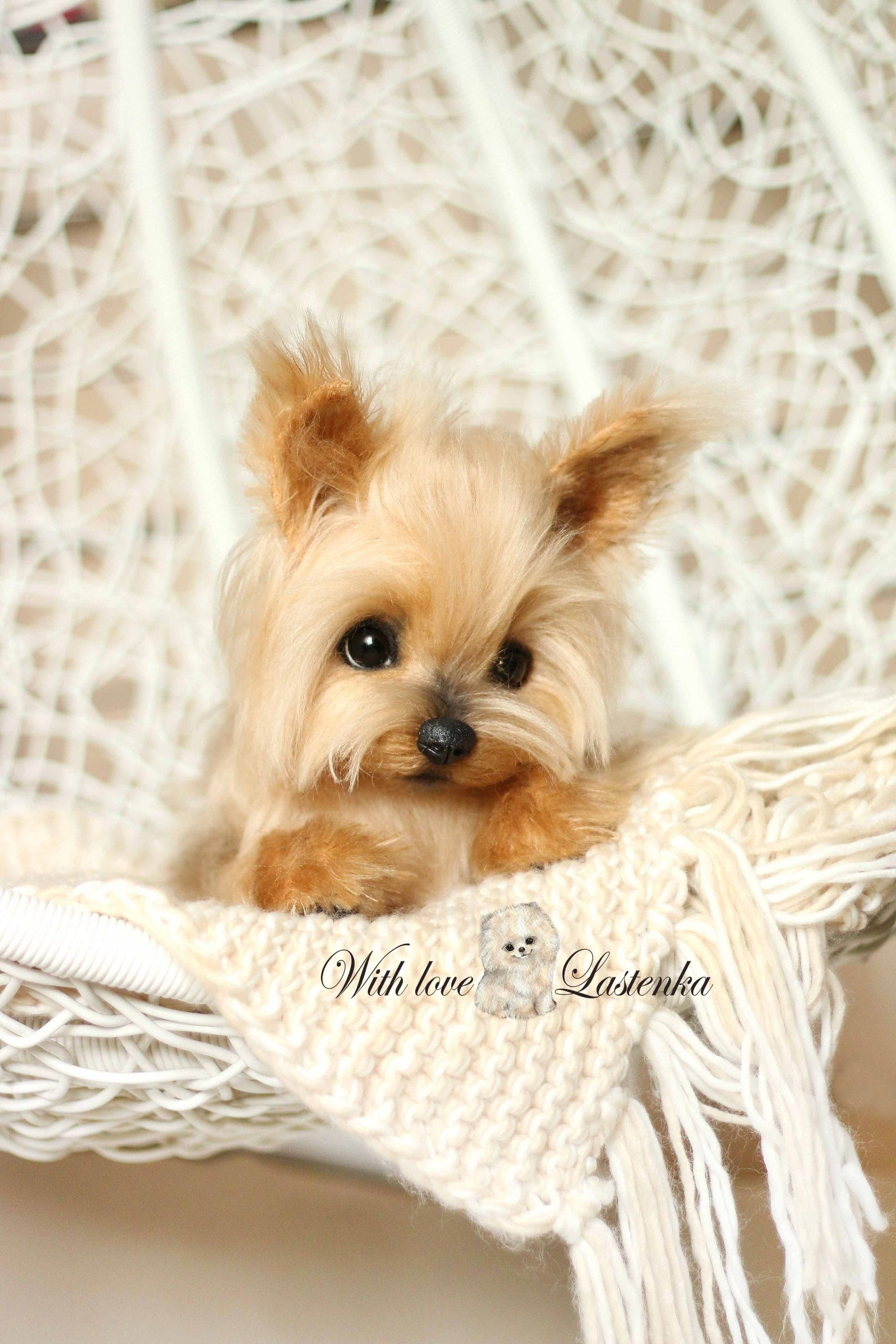 Excited To Share The Latest Addition To My Etsy Shop Yorkie Precious Portrait Artist Dog Mohair Collectible Toy Ooak Pu Yorkie Puppy Yorkshire Terrier Yorkie