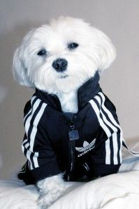 Upcycle An Adidas Track Suit Into A Dog Coat