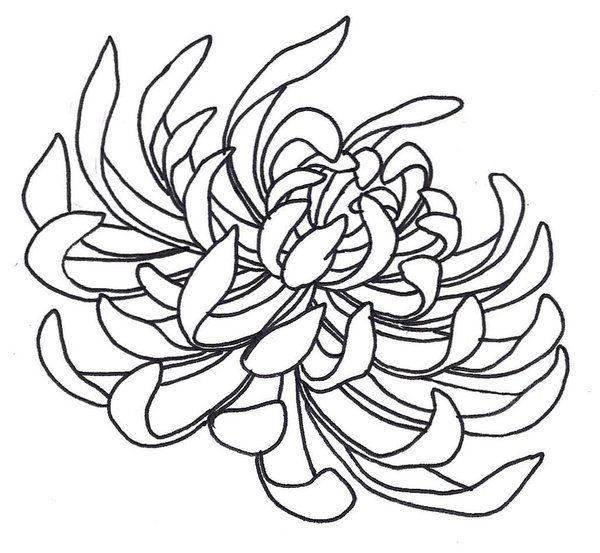Spider Chrysanthemum By Sneakyguy On Deviantart Chrysanthemum Drawing Flower Art Drawing Flower Drawing