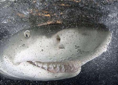 Love sharks!