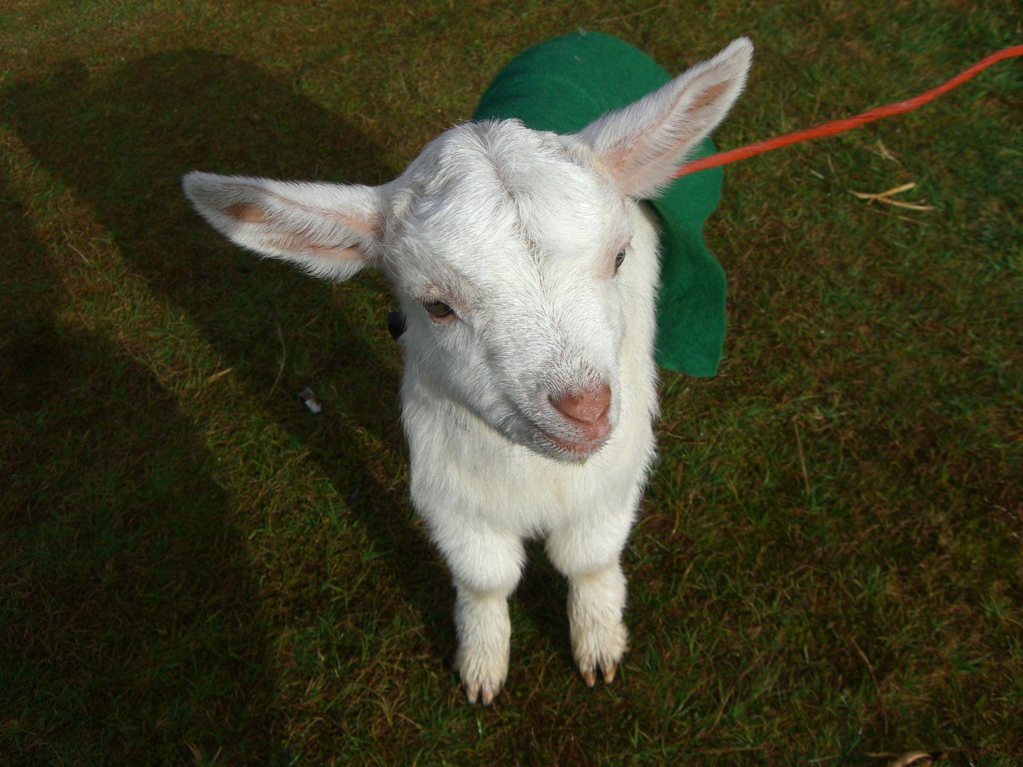 what a cute pet!