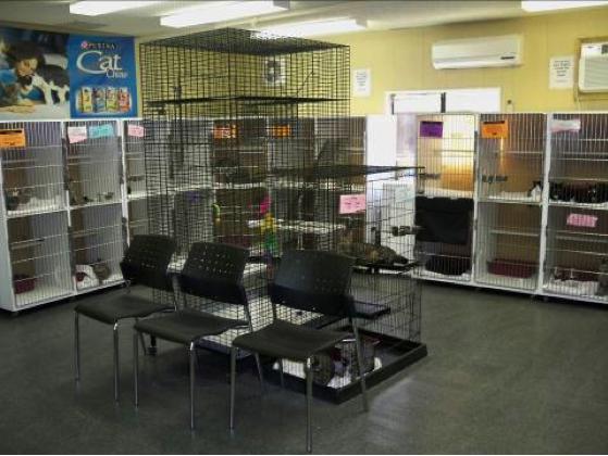 Facility Design and Animal Housing | UC Davis Koret Shelter Medicine Program
